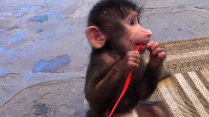 """""""Что значит дети"""" - в бердянском зоопарке обезьяна играет со львом (видео)"""