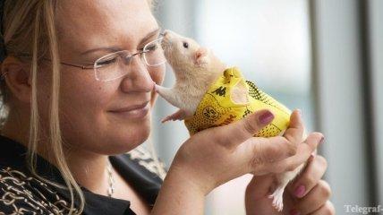 Ученые советуют на 8 марта дарить трансгенных мышей