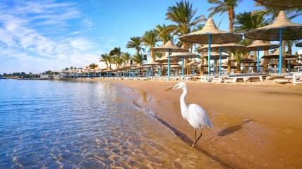 Мест для отдыха в Египте станет еще больше