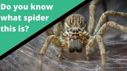 Новий австралійський додаток визначає вид павуків і змій зафото