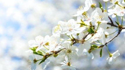 Какой праздник 18 марта: народные приметы и запреты