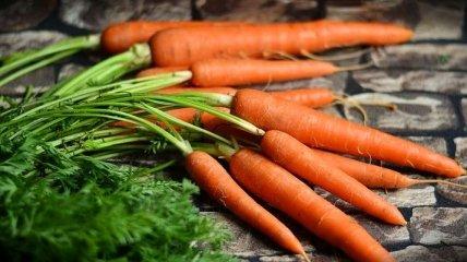 Морковь - полезные свойства и калорийность