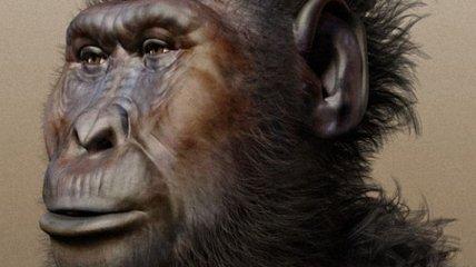 Почему у наших предков-мужчин сформировались крепкие лица?