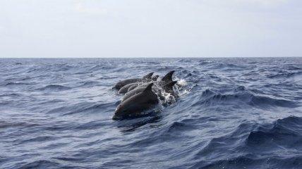 Глобальное потепление: морские виды быстрее наземных адаптируются к изменению климата