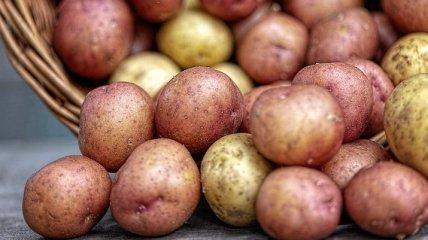 Дефицит хранилищ: картофельной отрасли в Украине грозит упадок