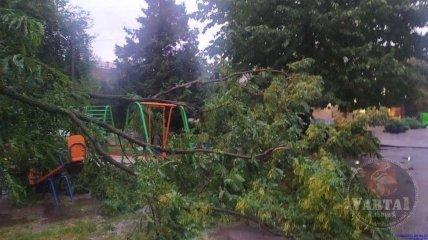 Ураган повалил деревья во Львове
