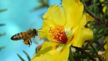 """Специалисты рассказали, что """"подсаживают"""" пчел на кофеин"""