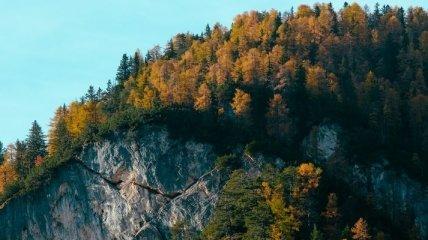 Изменения в мировом климате практически удвоили скорость роста лесов Новой Англии
