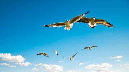 Очень часто птицы в воздухе просто планируют