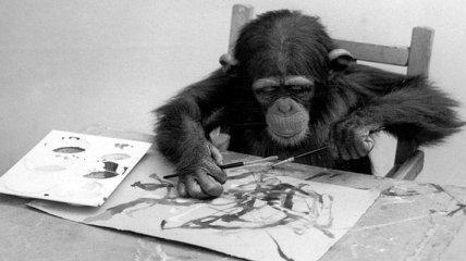 Животные-художники и их картины (Фотогалерея)