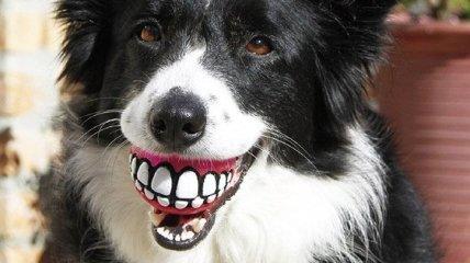 Вот это зубище: Смешные собачки из мячиком с зубами