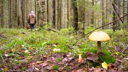На Буковине в лесу умер мужчина