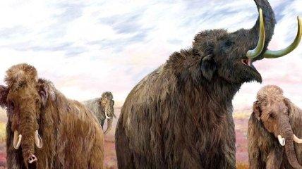 В Мексике обнаружено кладбище мамонтов (Видео)