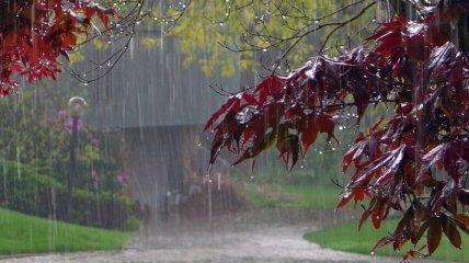 Дожди и грозы накроют Украину: прогноз погоды на 5 августа