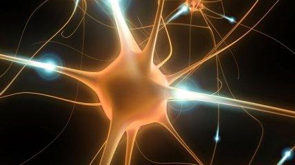 В чем заключается новый принцип образования нейронов?
