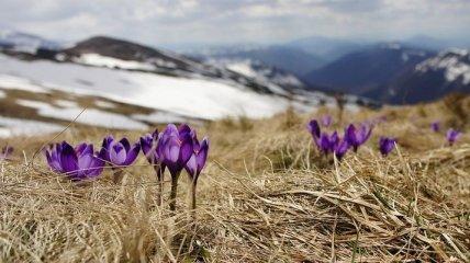 Прогноз погоды на 24 февраля: сохранится сухая и холодная погода