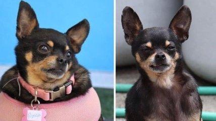 20 милых собак которые смогли преодолеть лишний вес
