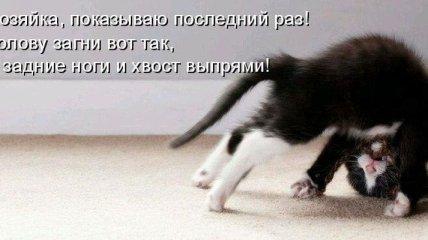 Для хорошего настроения: веселые и смешные котики