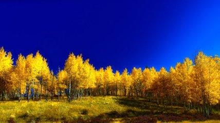 Прогноз погоды в Украине на 3 ноября: будет солнечно