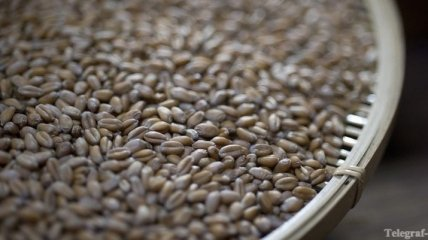До середины октября будет экспортировано 80% объема пшеницы