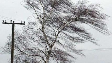 В Украине ожидаются сильные порывы ветра и дожди