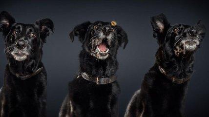 Позитивные снимки, на которых собаки пытаются словить вкусняшки на лету