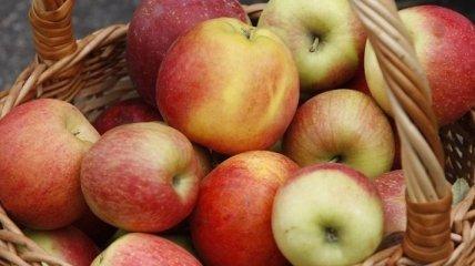 Эксперт: экспорт украинских яблок вырастет на 30%