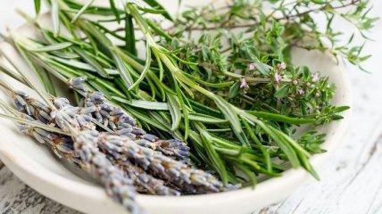 Целебные травы, которые помогут снять боль в горле