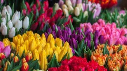 У Нідерландах відбувся квітковий ажіотаж на День матері
