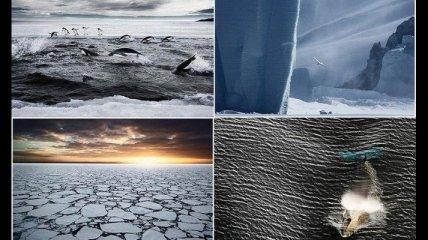 Завораживающие морозные снимки Антарктиды (Фотогалерея)