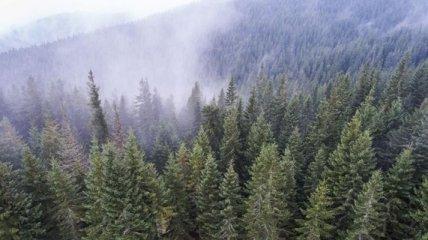 В Украине за последний год рекордно восстановили лес