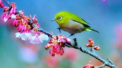 Самые красивые птицы из разных уголках мира (Фото)