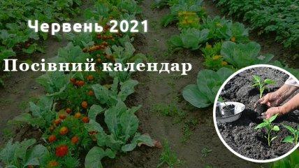 Сприятливі дні для посівів в червні 2021 року: що і коли садити в перший місяць літа