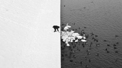 Эти минималистичные кадры подарят вам безмятежное спокойствие (Фото)
