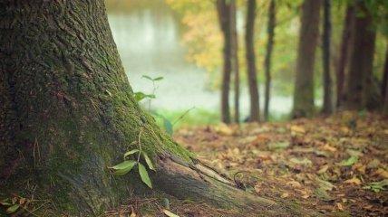 Вот так выглядят лесные феи: невероятные скульптуры из старых коряг (Фото)
