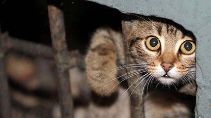 Вещь, у которой нет прав: почему закон в Украине не защищает животных и как это исправить