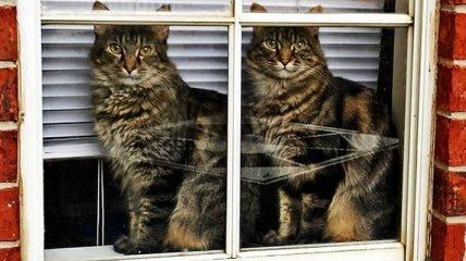 Один в один: удивительные фотографии животных-близнецов