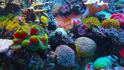 Состояние Мезоамериканского кораллового рифа ухудшилось