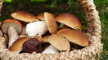 ТОП-5 полезных грибов