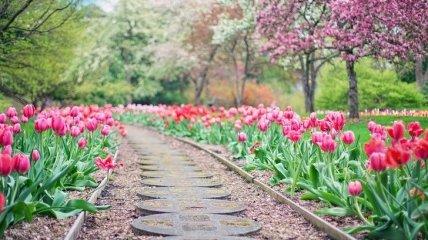 Потрясающие ботанические сады со всего мира, которые очаруют вас с первого взгляда
