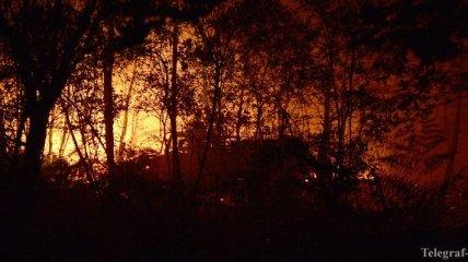 Из-за лесных пожаров городок в Австралии под угрозой исчезновения