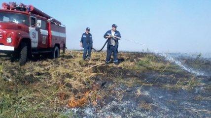 Площадь торфяных пожаров под Киевом постепенно уменьшается