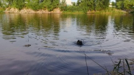 В Киеве ГСЧС обнаружила тело мужчины в озере
