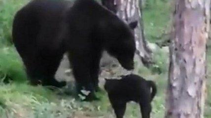 """""""Вася, нам не надо столько мяса"""": в сеть попало забавное видео, как кот защитил хозяев от медведя"""