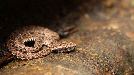 Самые опасные животные Амазонии (Фото)
