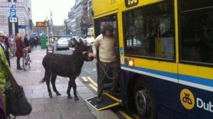 Ирландия - это отдельная тема: нескучные будни жителей