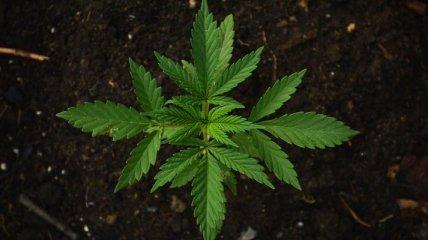В бельгийском порту обнаружили рекордные 7,4 тонн марихуаны