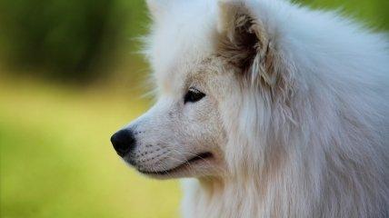 Страдающий от жары пес стал звездой соцсетей (трогательное видео)