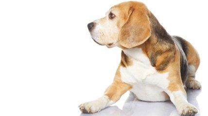За информацию о потерянной собаке обещано 16 тысяч долларов