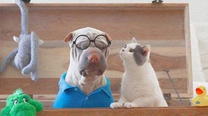 Забавная дружба: веселые пес и кот умеют развлекаться